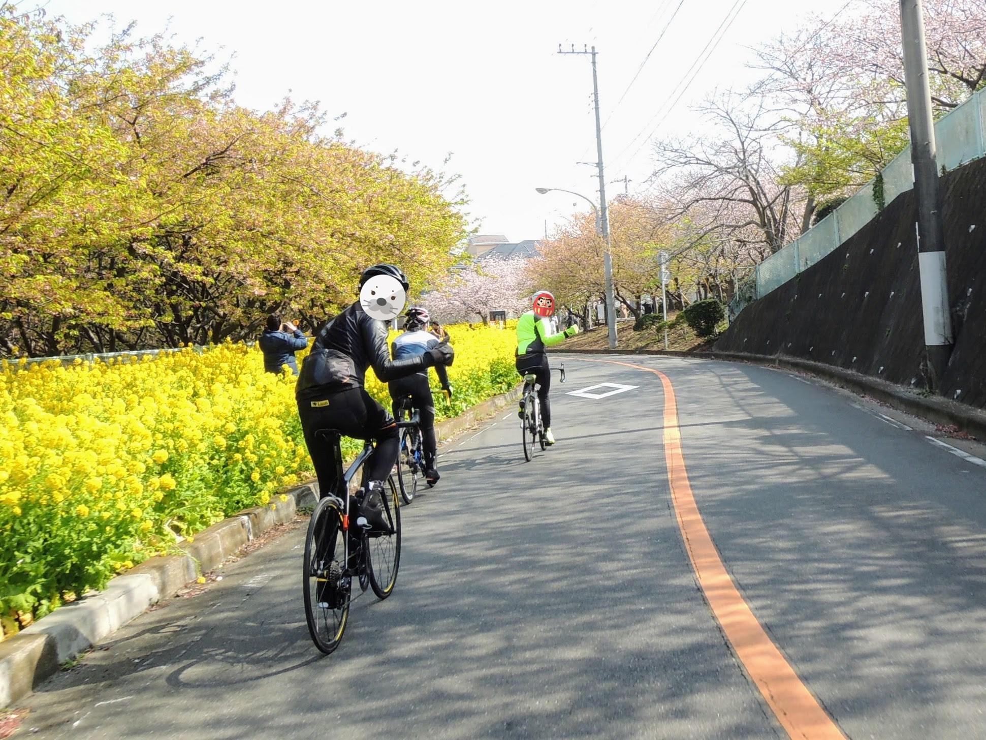 三浦海岸駅まで、菜の花と河津桜が咲き誇る