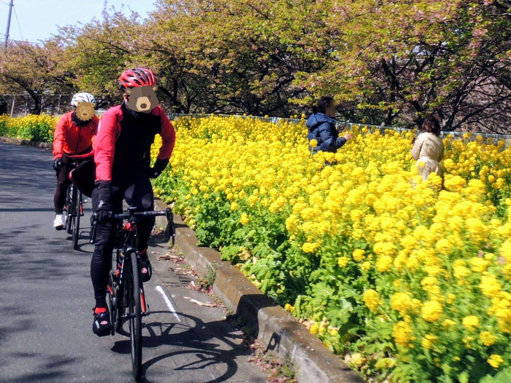 菜の花の黄色、ジャージの赤