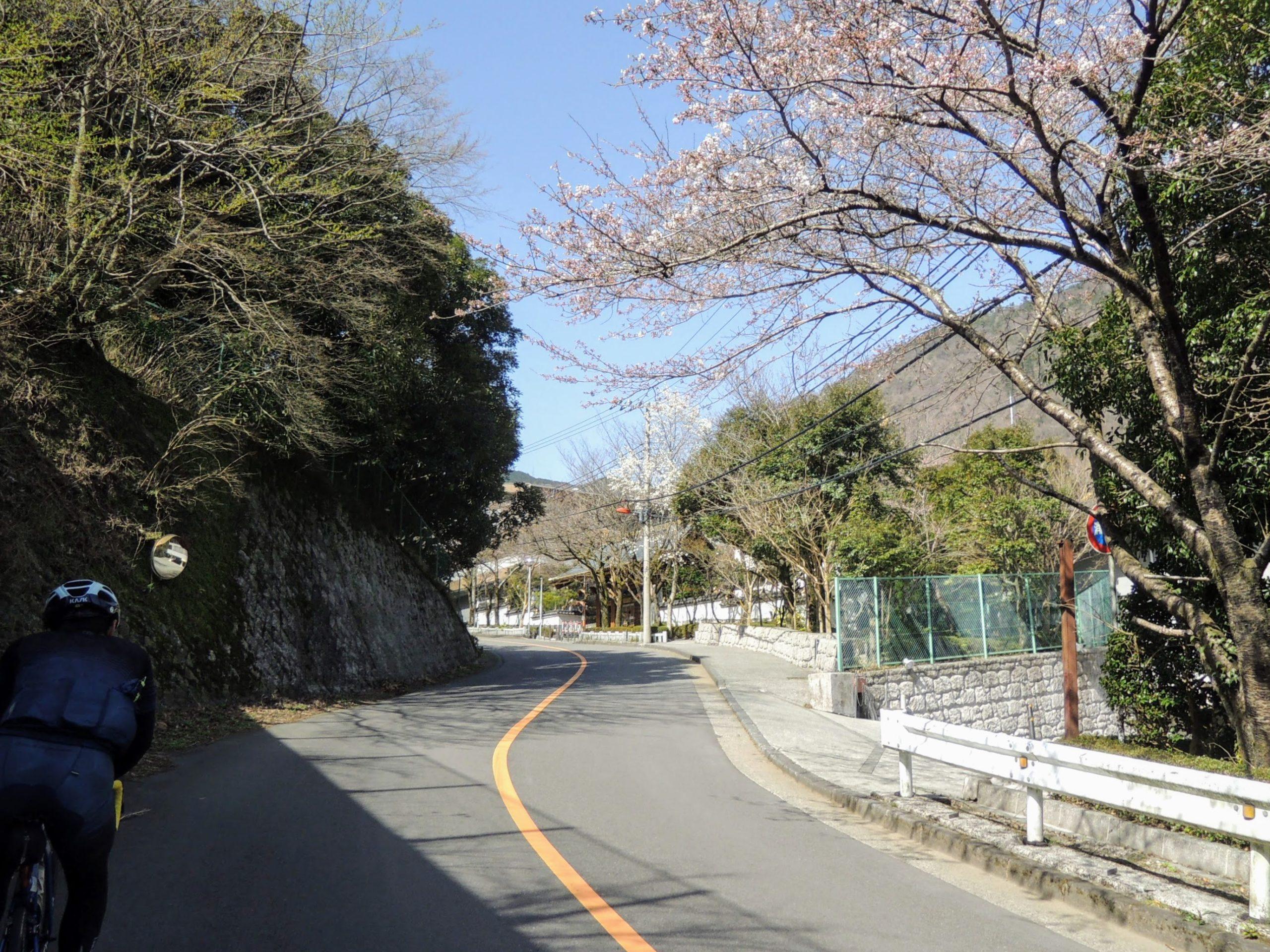 登坂中に見かけた桜