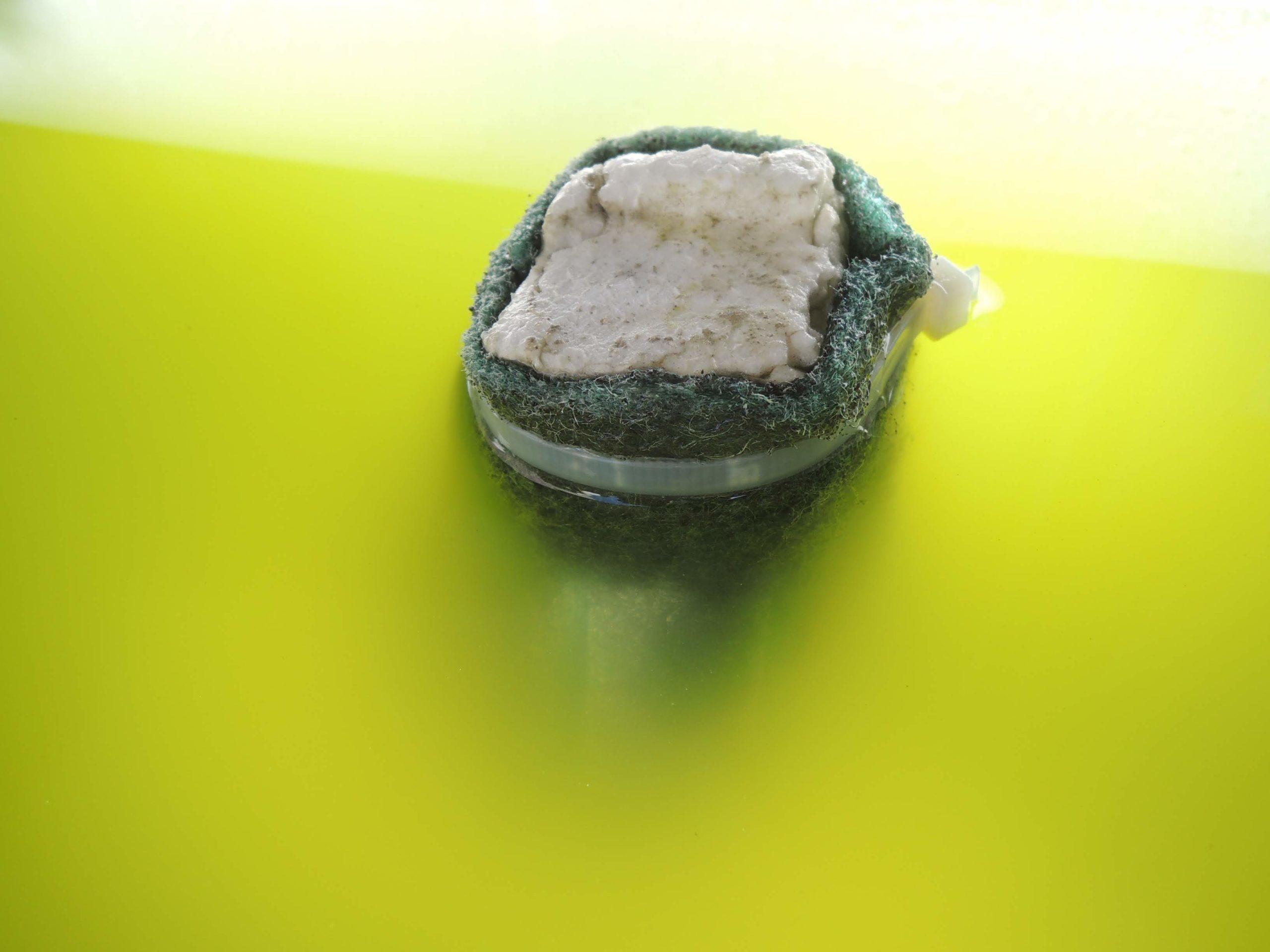 美しい緑茶カラーの飼育水に浮かぶメダカの産卵床
