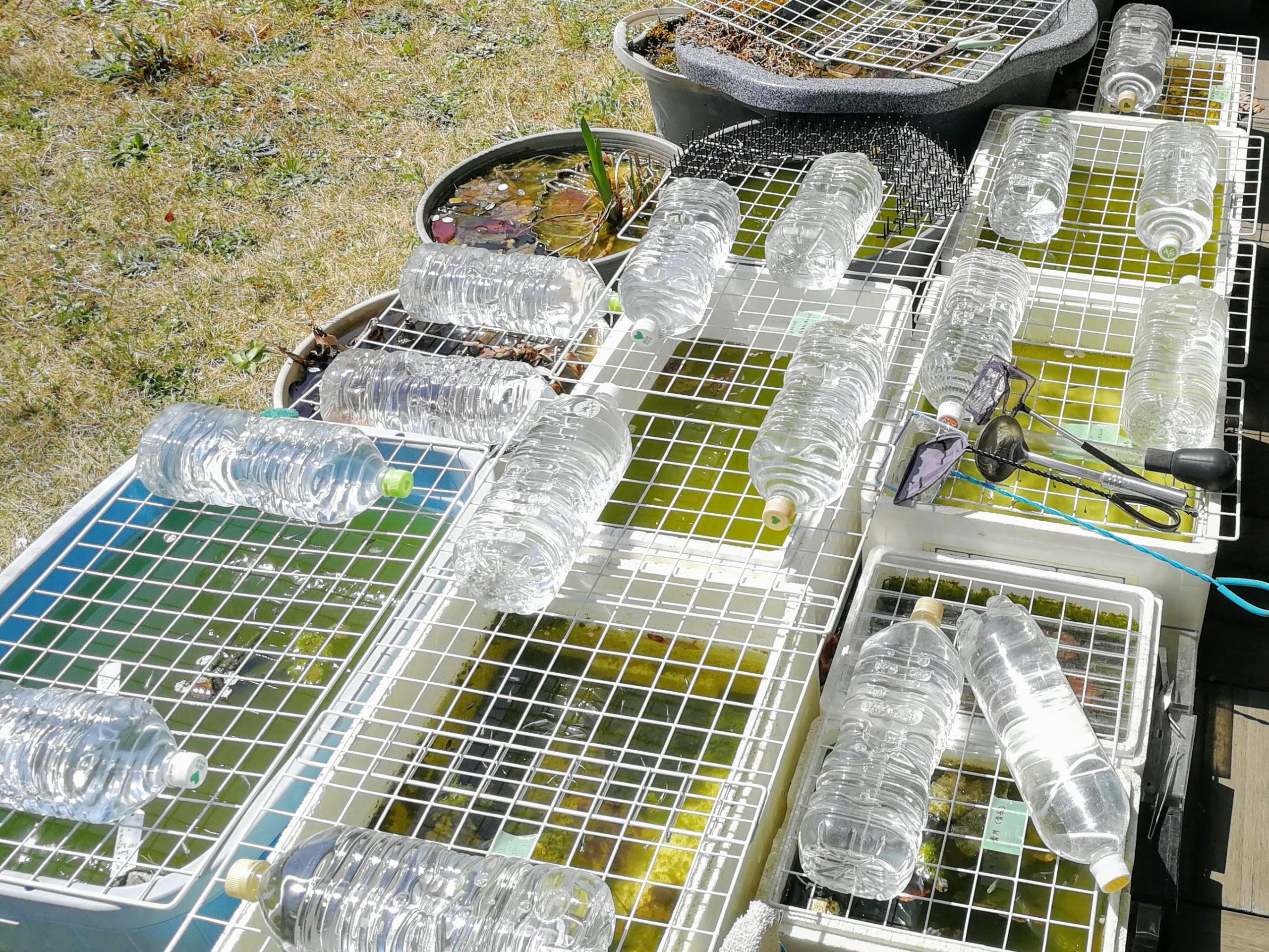たくさんのメダカ容器が並ぶ庭