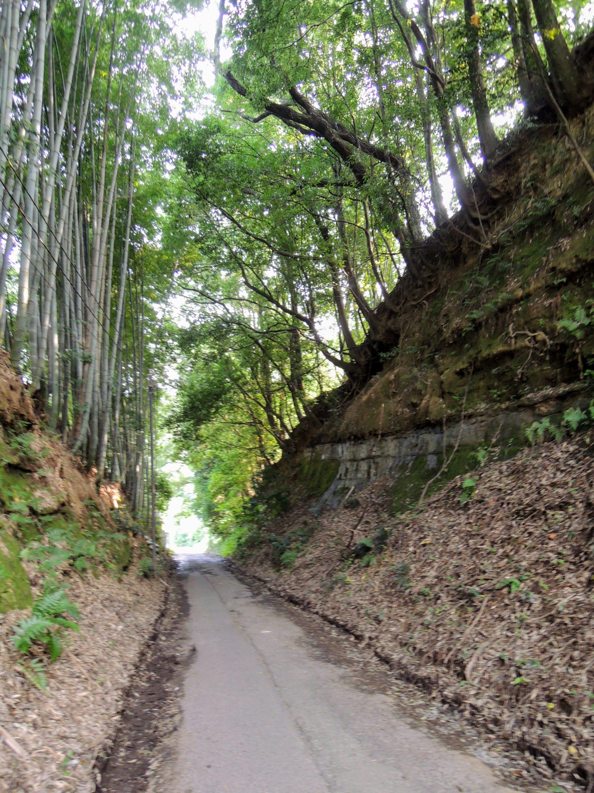 谷戸に至る切通しの道